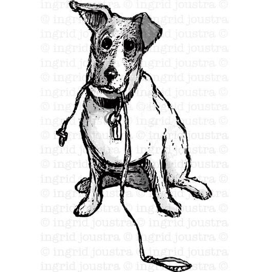 Jack Russel:  illustratie bij een rechtbankcolomn | Haarlems Dagblad