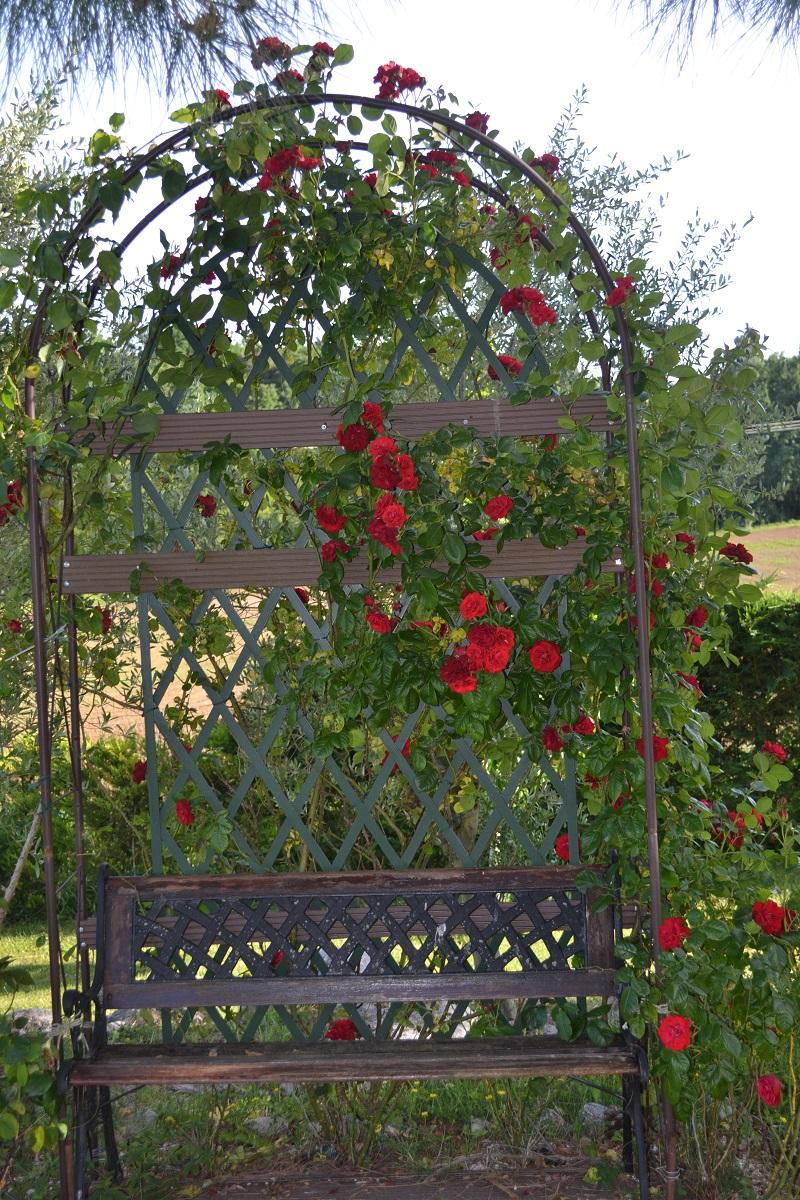 La roseraie en pleine floraison