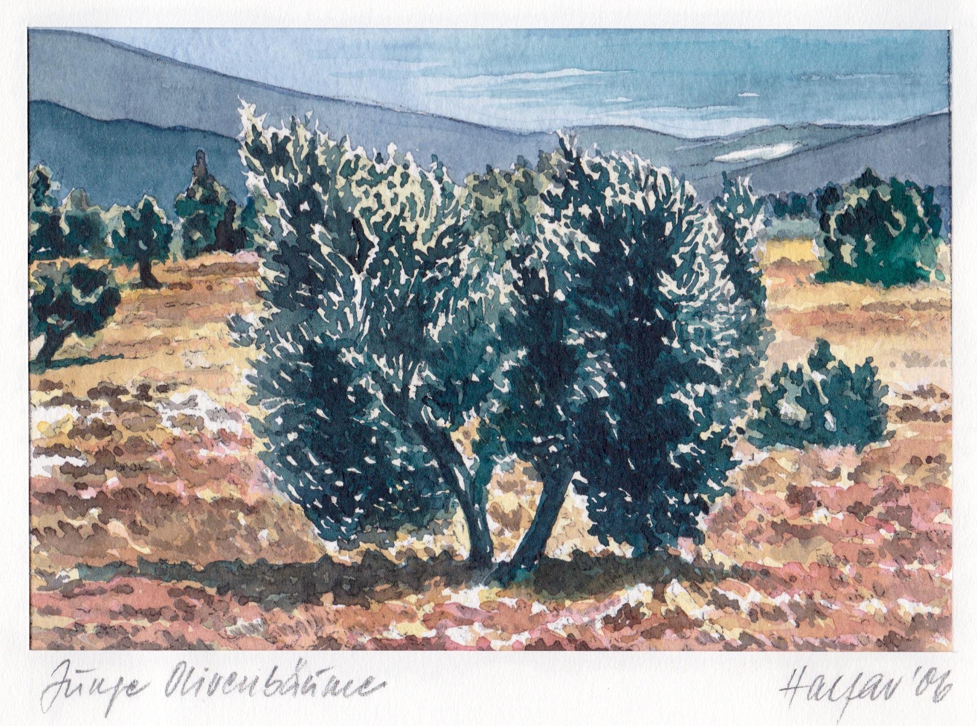 ' Junge Olivenbäume ' Aquarell/Pittstift, 17,5 x 22 cm, 2006