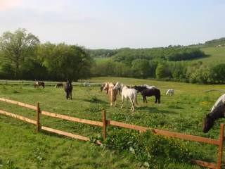 La journée est finie ... pour les poneys aussi, heureux de se retrouver au pré