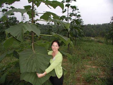 World Tree Technologies Radio Broadcast Pic of Empress Spendor Tree Leaves