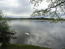 starnbergersee.bayern - Maisinger See
