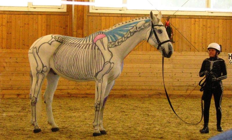 """Vergleichbare Körperteile bei """"visible horse - visible rider"""" Vorführung / CR Symposium"""