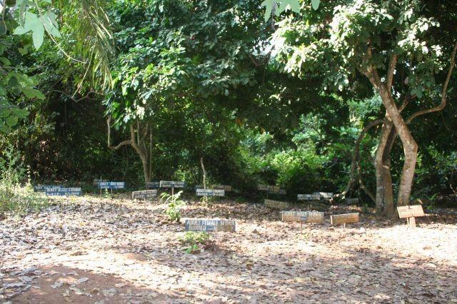 Affen-Friedhof