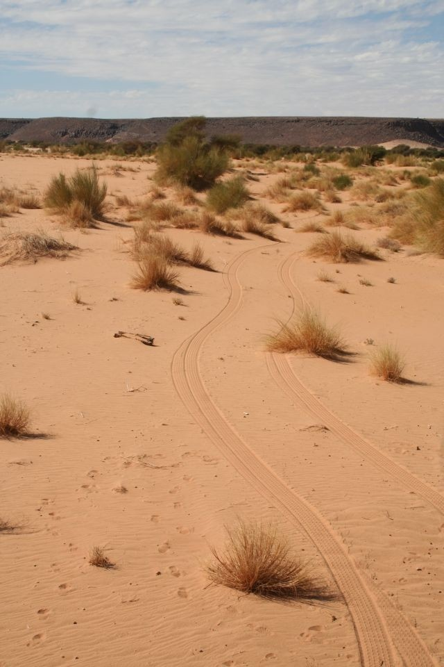 Monsters Spuren im Sand