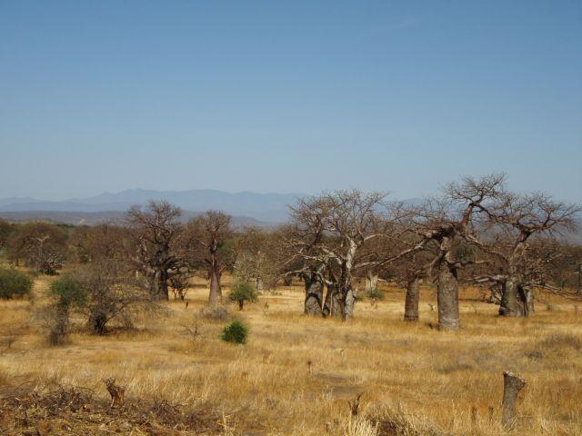 Im Baobab Valley