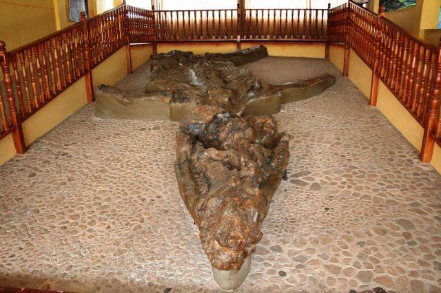 Urmeli Kronosaurus