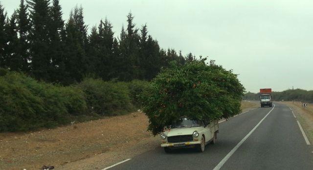 hoch auf dem grünen Wagen