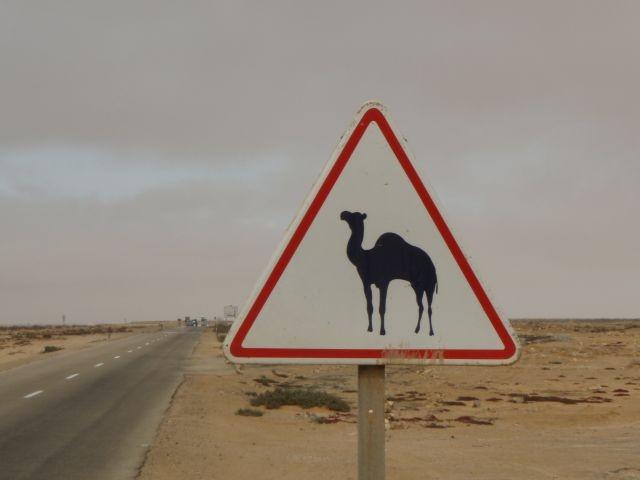 Achtung Kamele