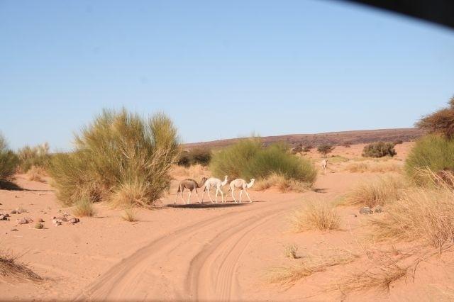 Besuch in der Wüste