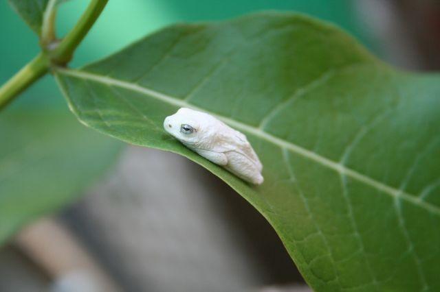 Mini-Frosch