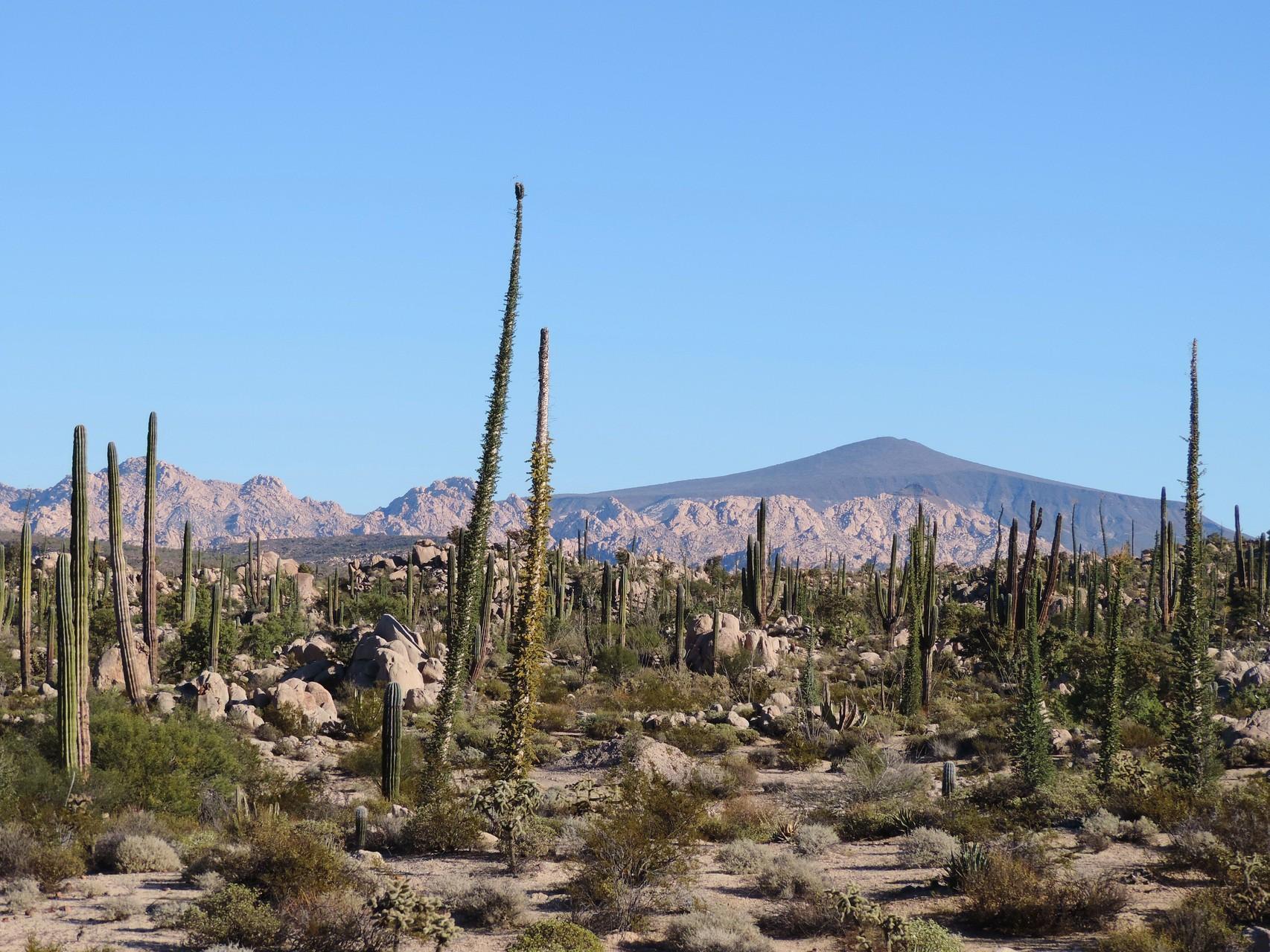 so schauts aus auf der Baja
