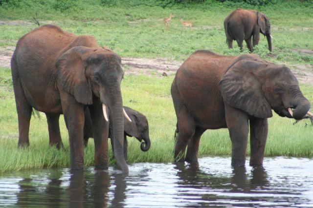 im Chobe Nationalpark