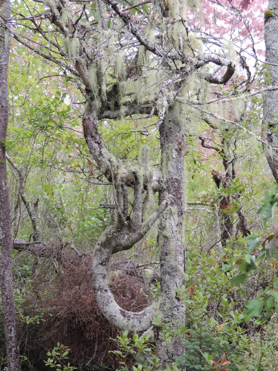 merkwürdige Bäume