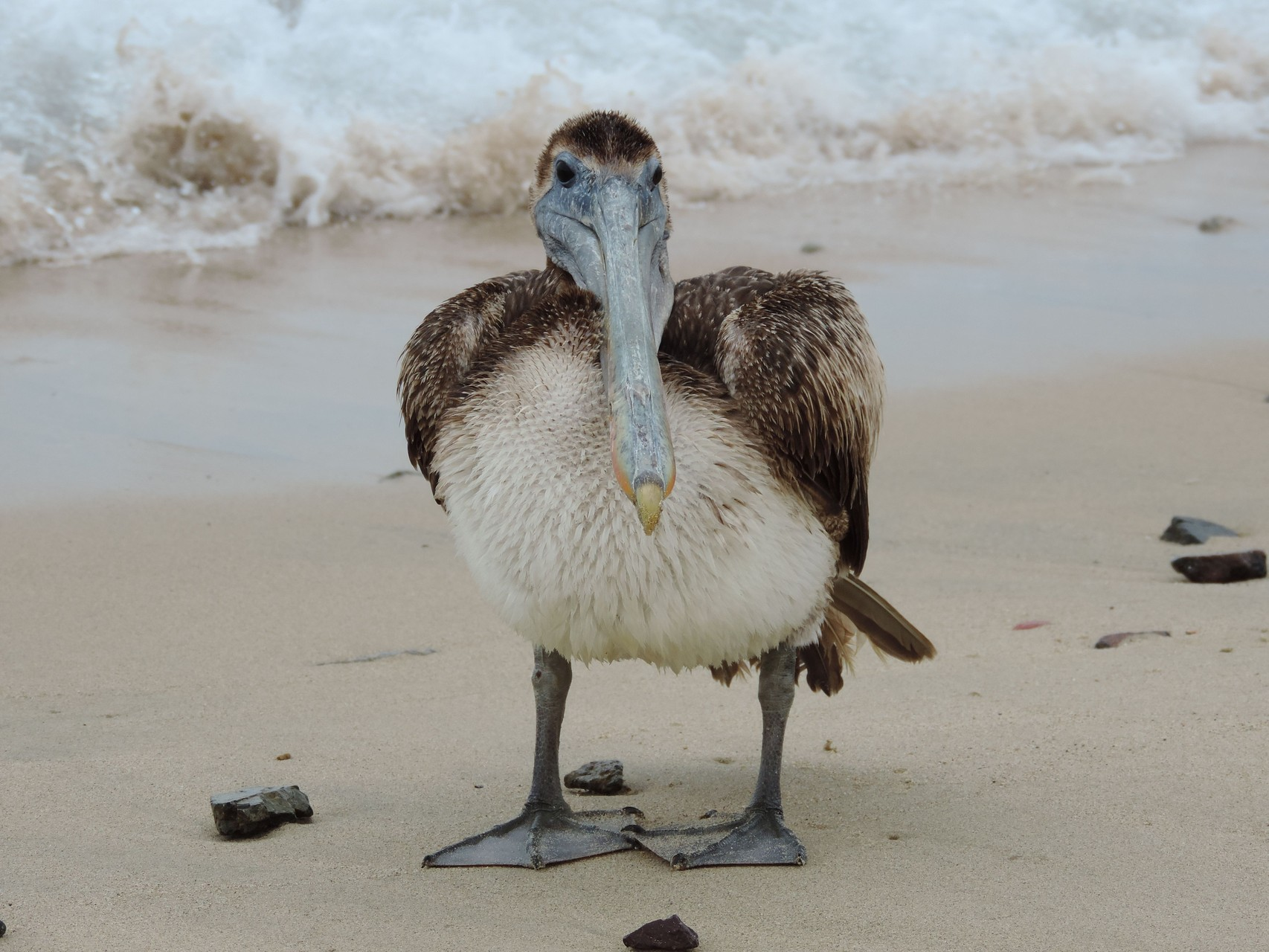 Besuch vom Pelikan