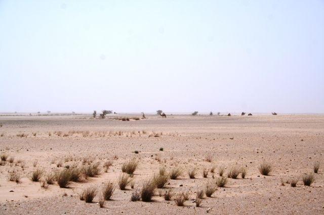 Kamele - die einzigen Begleiter
