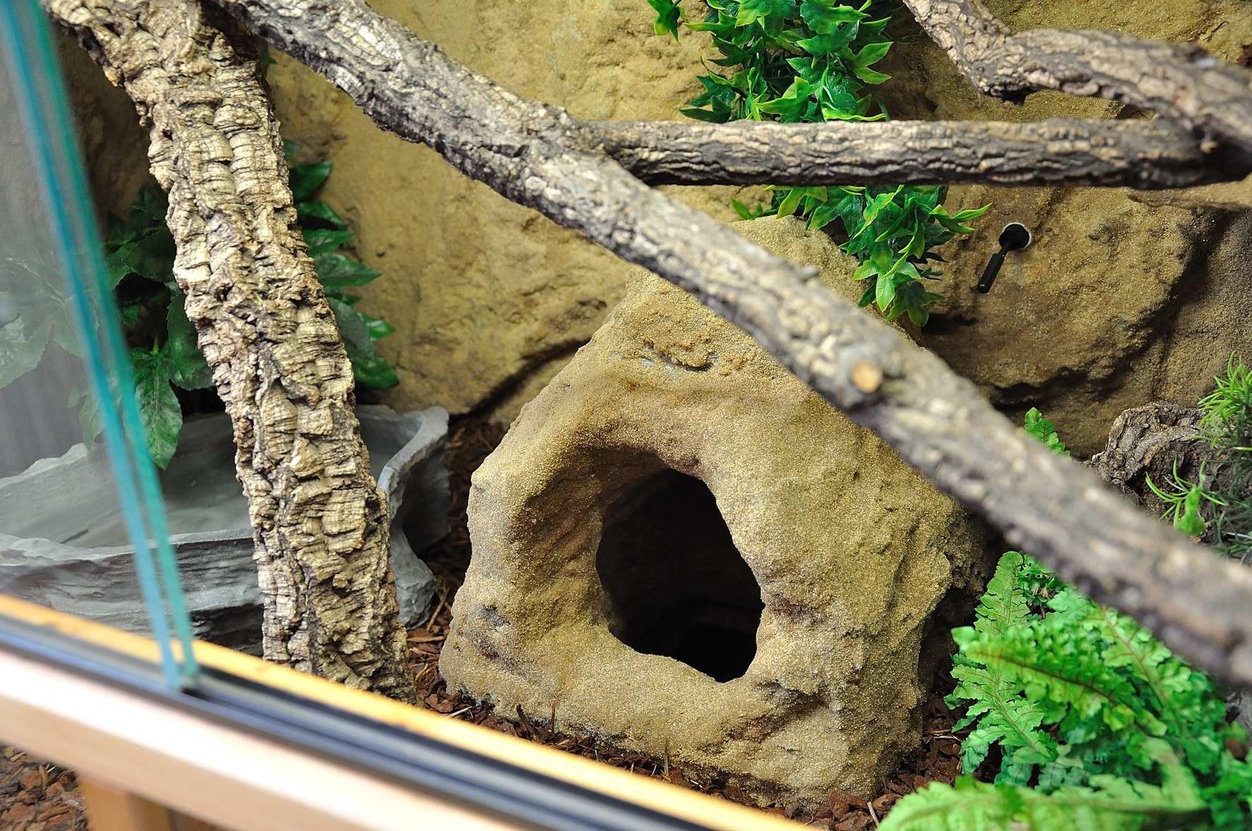 Eingang Rackhöhle - unteres Terrarium