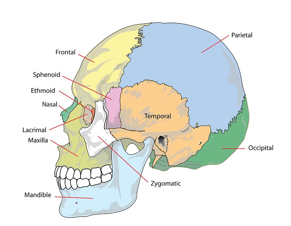 Neu ab Mai 2021:  Therapie von cranio- mandibulären Dysfunktionen (CMD).