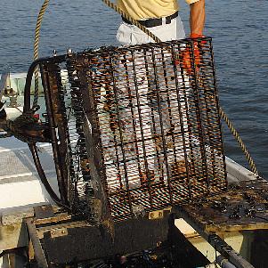 漁師さんのジョレン