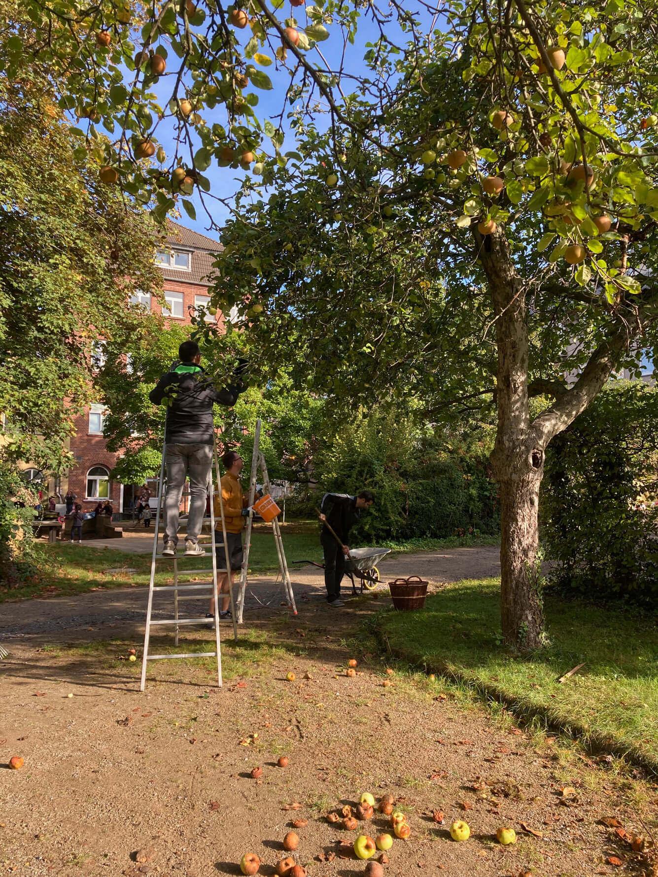 Ernte im Klostergarten