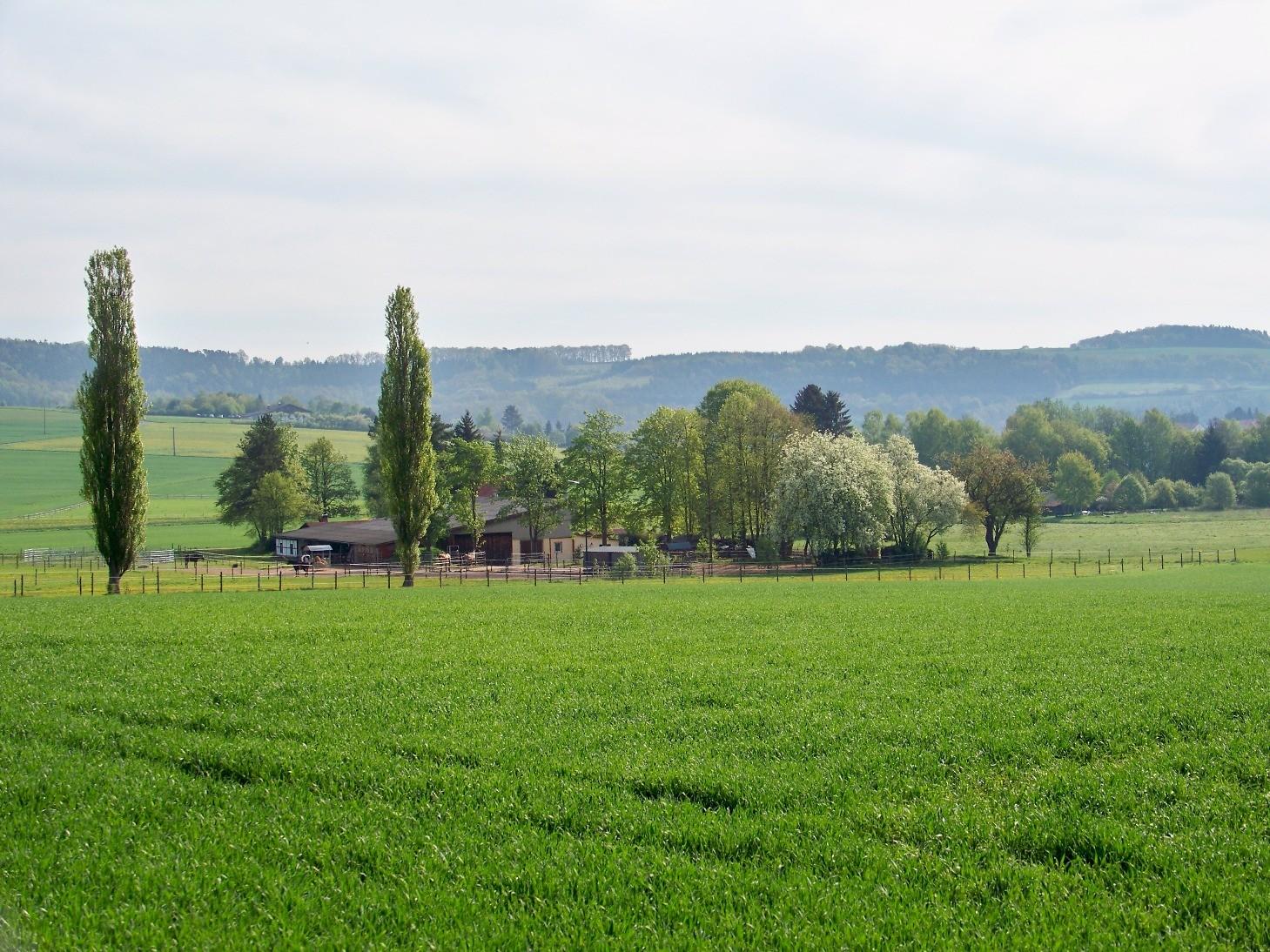 Crossfield-Ranch