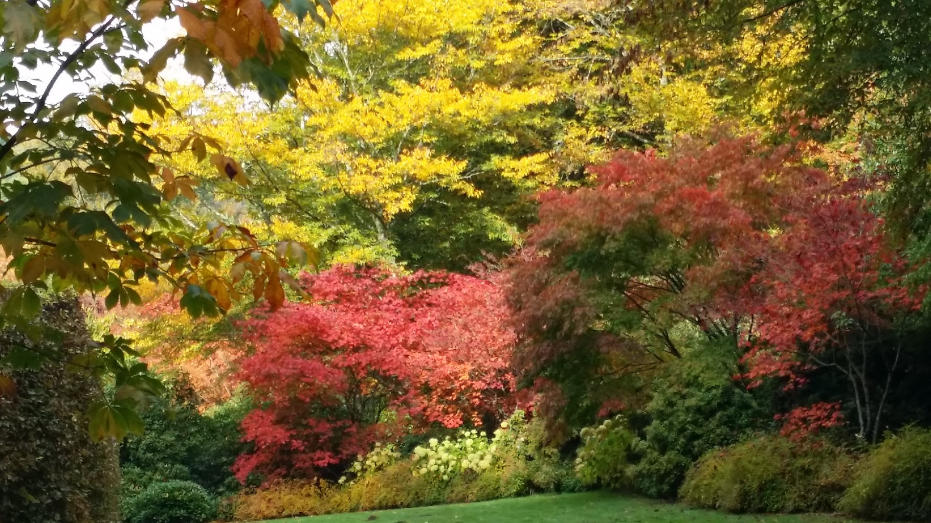 Arboretum de la Sedelle
