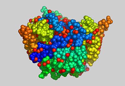 Immunsystem Protein