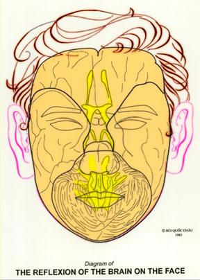 Dien Chan réflexologie du cerveau sur le visage