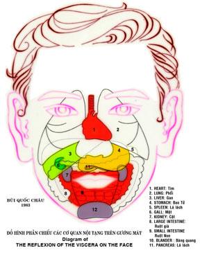 Dien Chan réflexologie des organes sur bas du visage