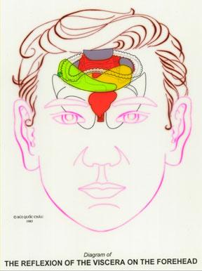 Dien Chan réflexologie des organes sur le haut du visage