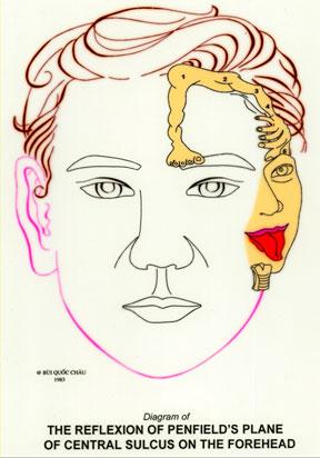 Dien Chan réflexologie Corps, visage et cou sur le visage (Penfield)