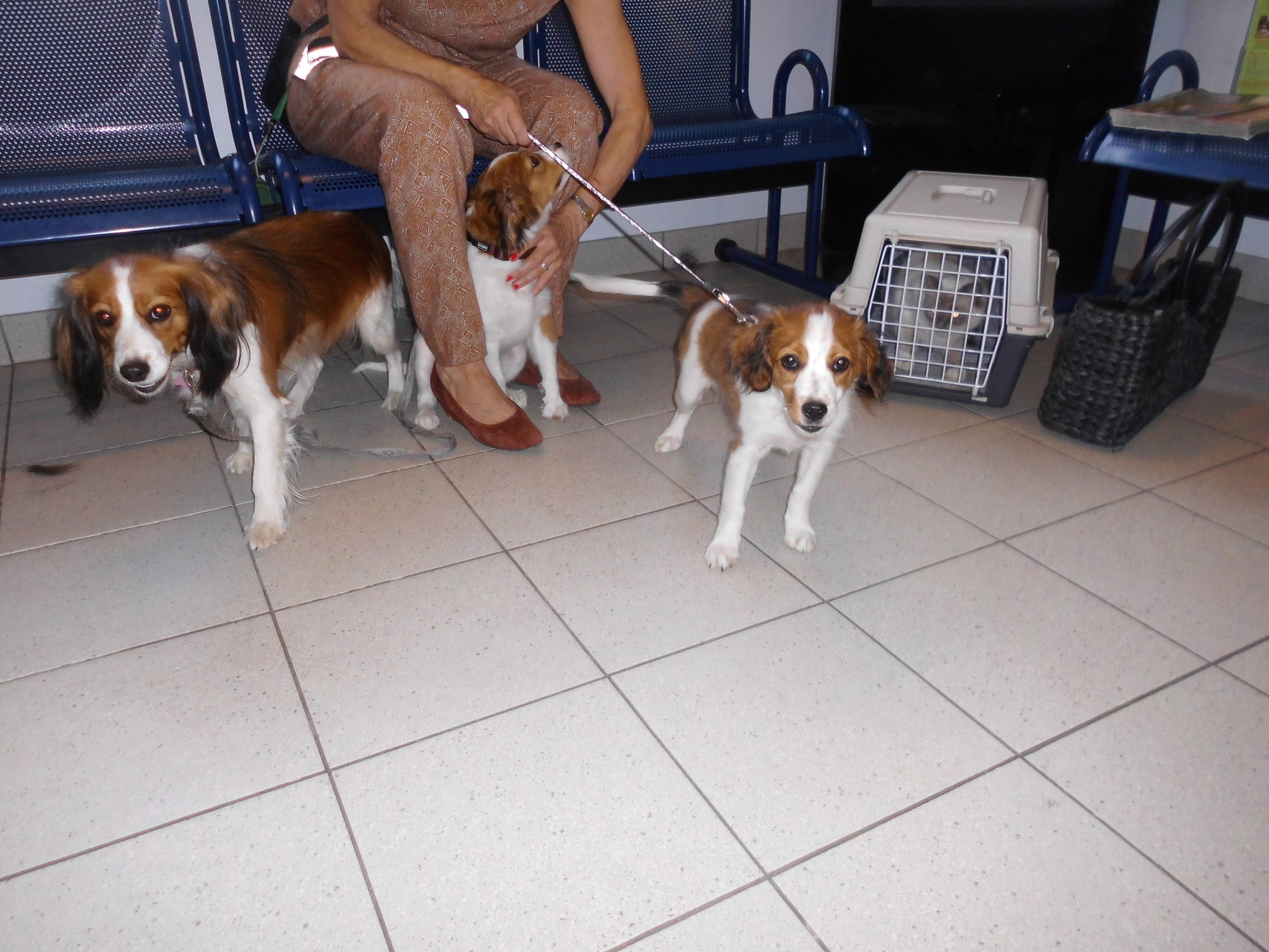 In de wachtkamer met Anne, Finne, Oscar, Ona en Belle