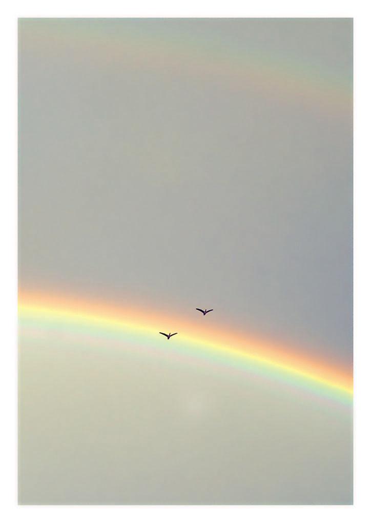 10 Gänse im Regenbogen