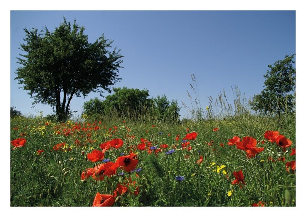 03 Blumenwiese