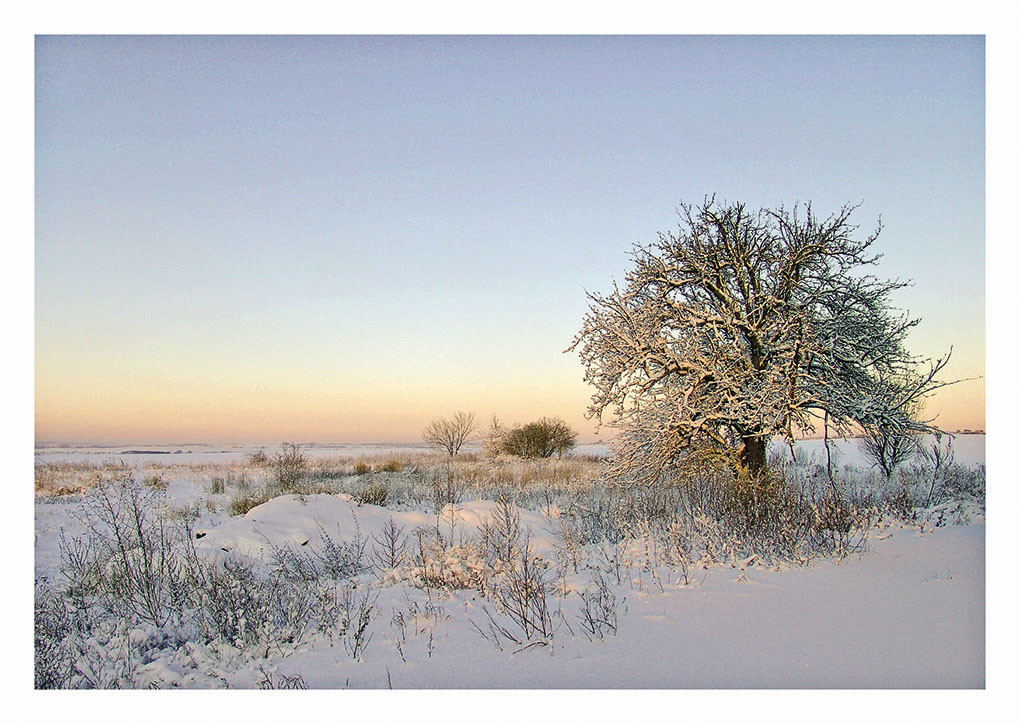40 Wintermorgen