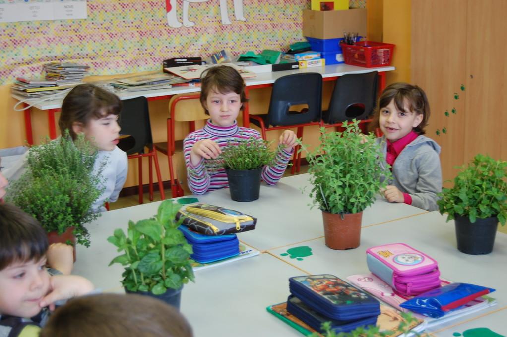 Sono arrivate le piante aromatiche per il nostro giardino dei profumi !
