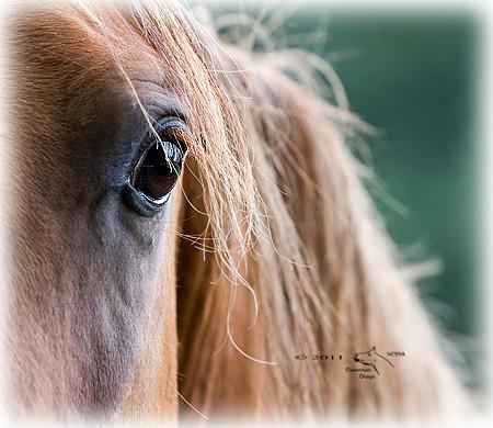 © 2011 NESSA Equestrian Design.