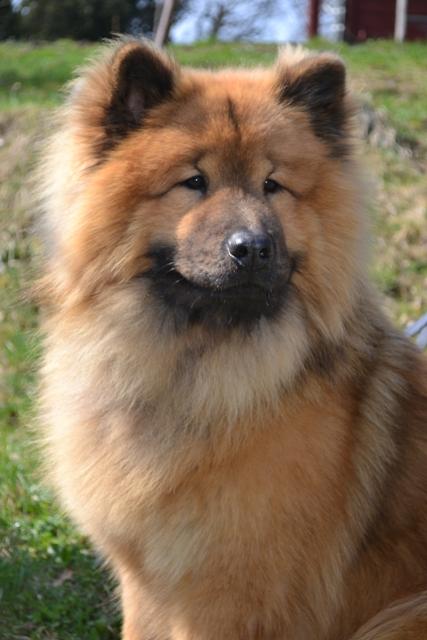 Lem-Osco von der Wolfsangel