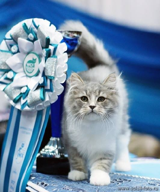 Best Kitten in Russia!