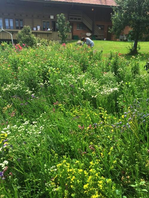 Blumenfeld mit Strohblumen und Stratizien