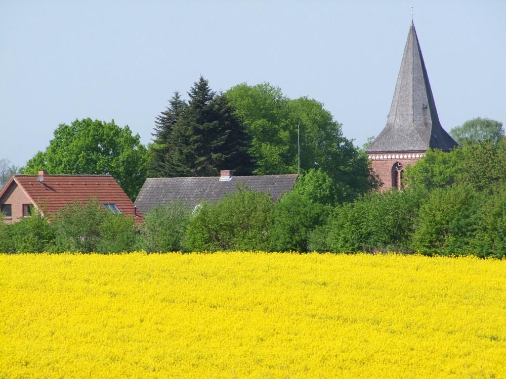 Maria-Magdalenen-Kirche zu Berkenthin im Mai zur Rapsblüte      / Foto R.Römer