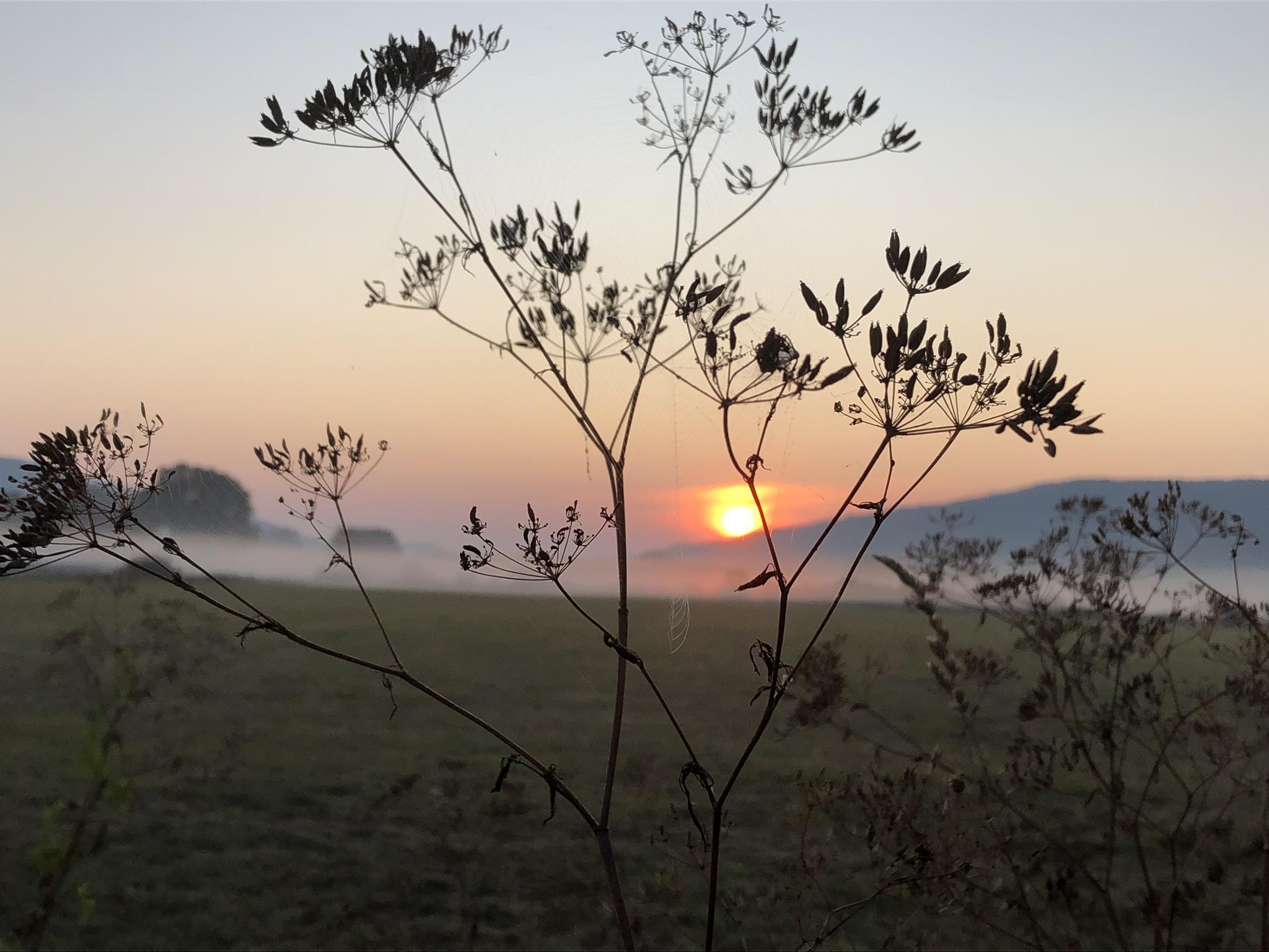 Sonnenaufgang in den Emmerwiesen