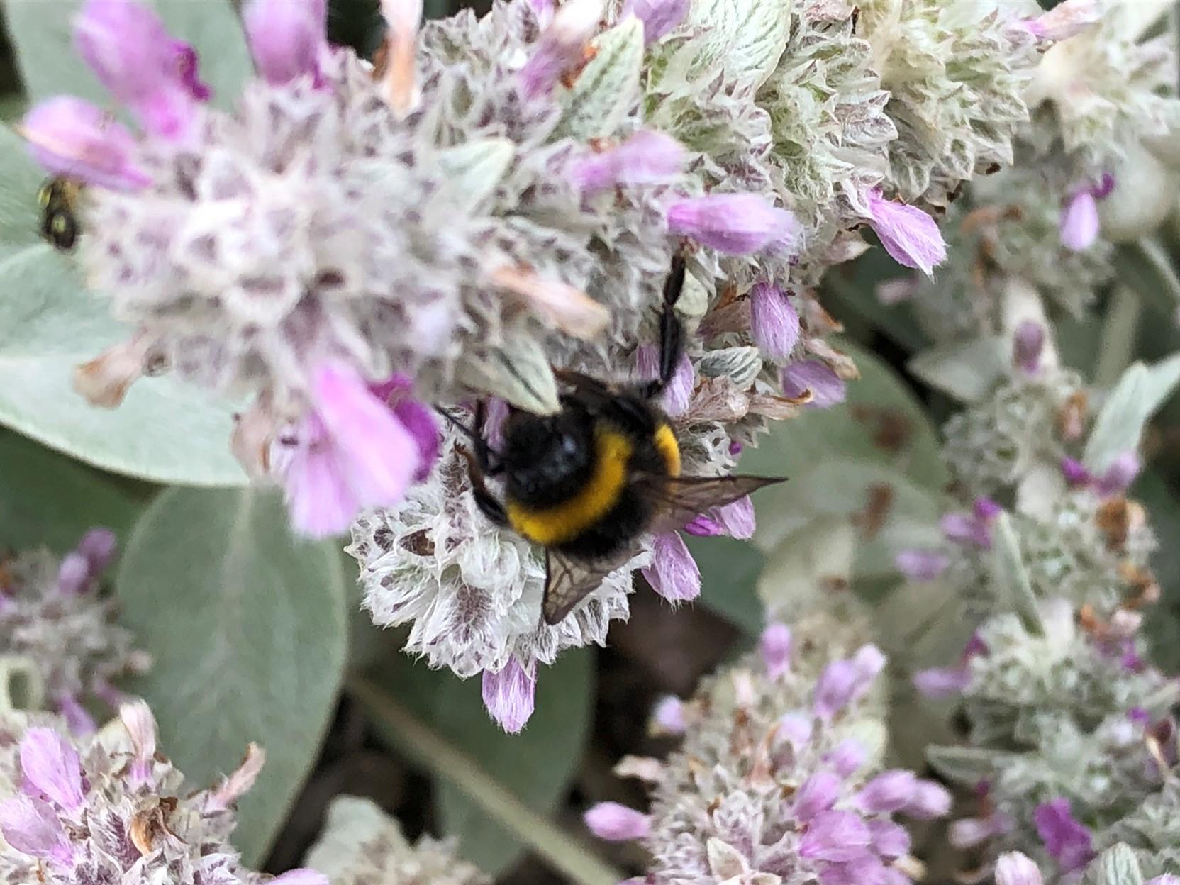 Auch die Bienen sind da, unsere fleißigen Helfer