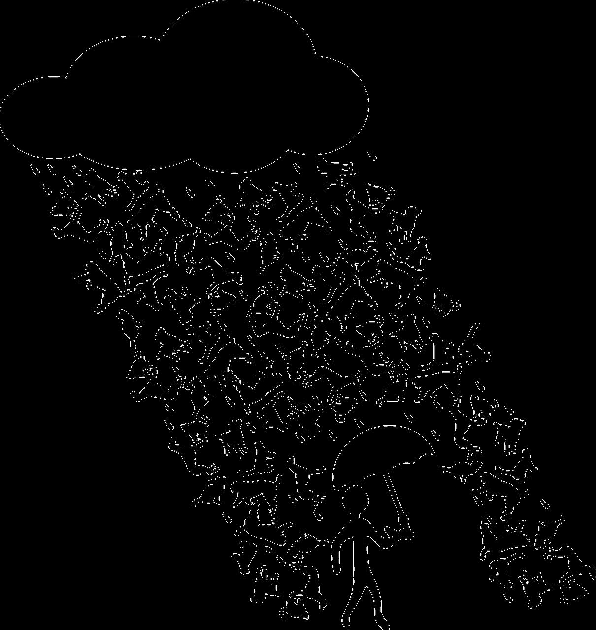 Les parapluies d'Erik Satie, par Stéphanie Kalfon