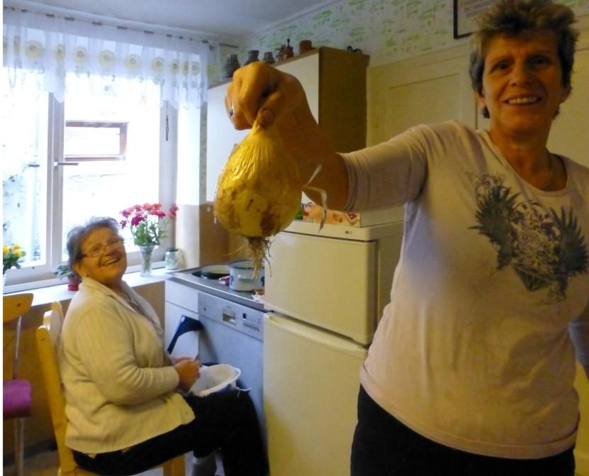 Erntestolz aus dem Bauern-Garten  - eine Riesenzwiebel!