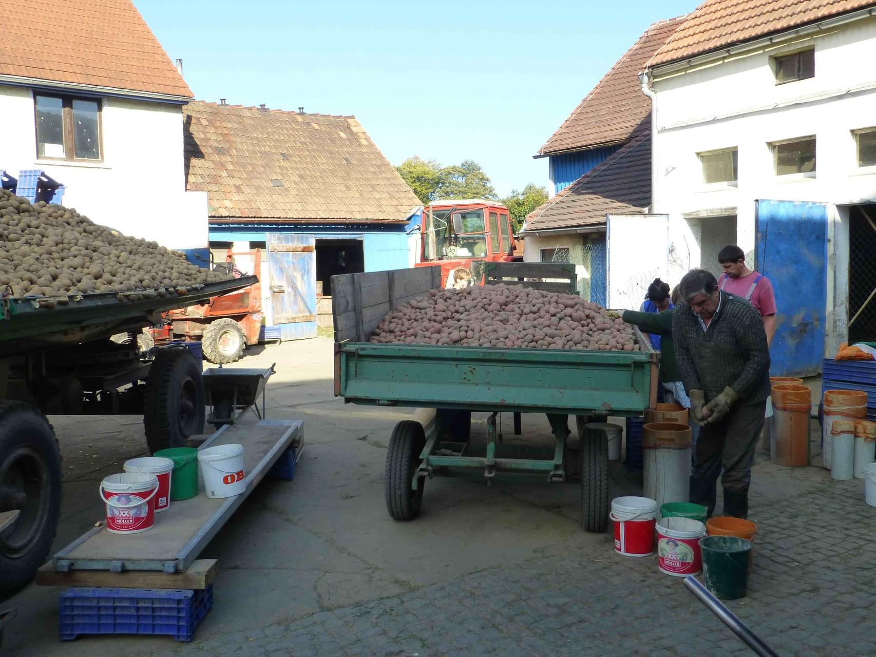 Jung-Bauer Karl  Oese bei der Arbeitsvorbereitung für den Erntehelfer-Einsatz