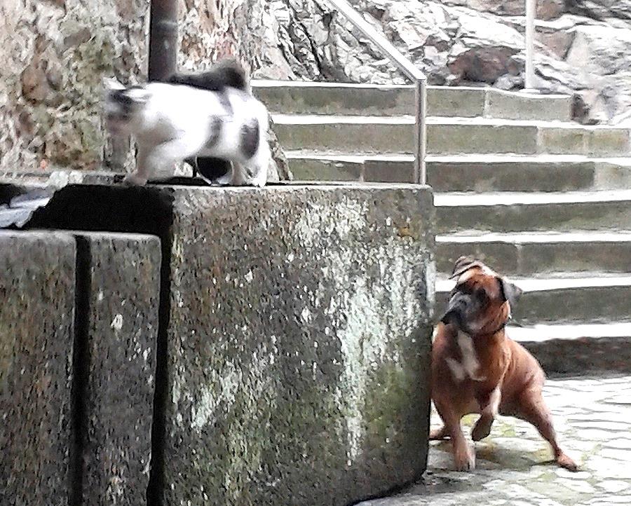 """Die """"Schlosskatze vom Klippenstein"""" - immer dabei, aber skeptisch und vorsichtig"""