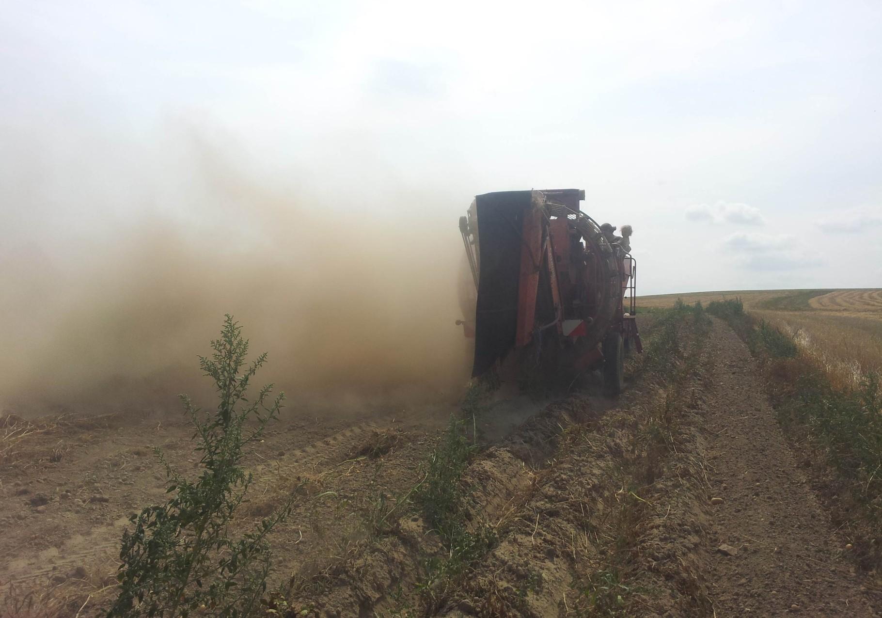 Was kein Städter sieht: Harte Arbeit, Frühkartoffelernte bei Spätsommer-Trockenheit