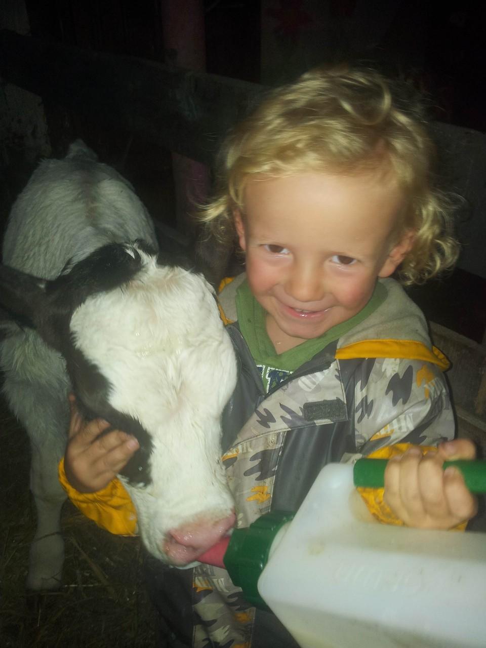 Sohn Jonathan beim neugeborenen Kälbchen