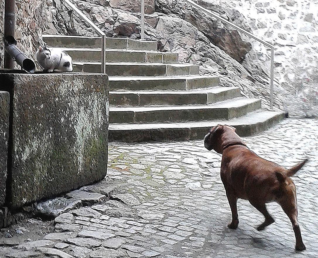"""Die """"Schlosskatze vom Klippenstein"""" - immer dabei"""